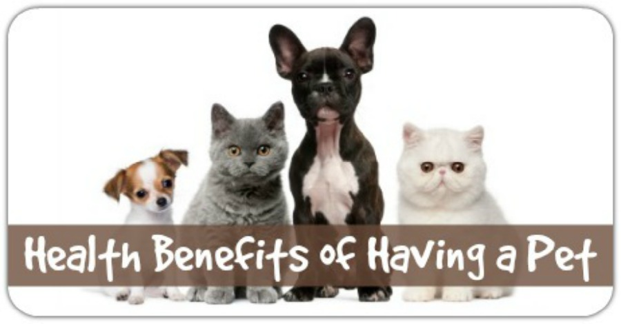 Health Benefits of Having Pets - https://healthpositiveinfo.com/health-benefits-of-having-a-pet.html
