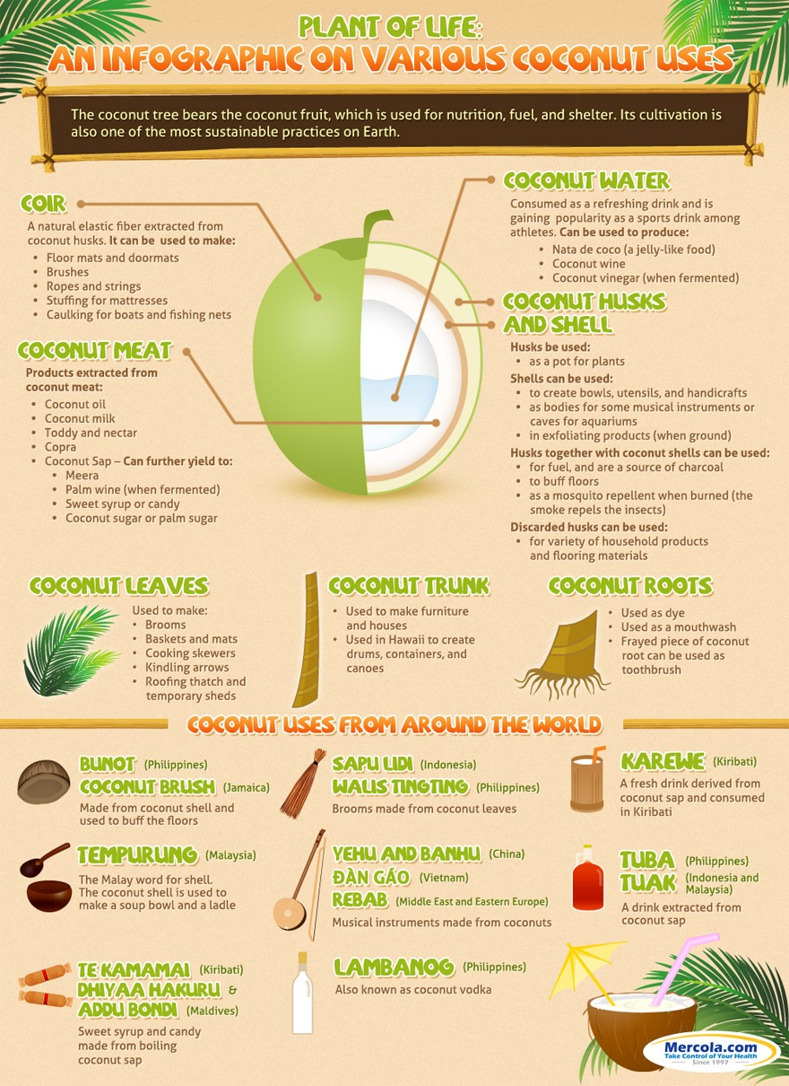 The Many Uses of Coconut ~ https://healthpositiveinfo.com/the-many-uses-of-coconut.html