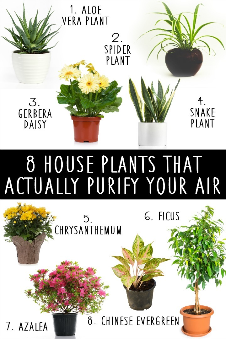 8 House Plants That Actually Purify Your Air ~ https://healthpositiveinfo.com/8-house-plants-that-actually-purify-your-air.html