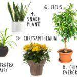 8 House Plants That Actually Purify Your Air