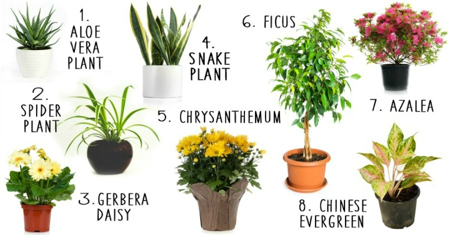 8 House Plants That Actually Purify The Air Https Healthpositiveinfo